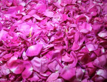 Lo sciroppo di rose: una tradizione che continua