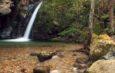 Quiliano, un territorio da scoprire – Parchi, cascate, ponti romani e prodotti tipici