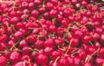 Un borgo incantato nel Ponente – Castelbianco: una ciliegia tira l'altra