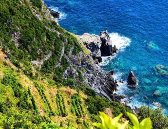 Il vigneto sull'Isola Palmaria