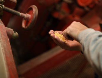 La farina di ceci del Molino di Pegli