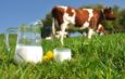 Latte Tigullio: il modello ligure fa scuola