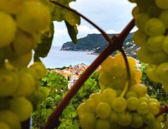 I vini bianchi della Cantina Sancio